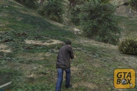 Майкл ловит животных